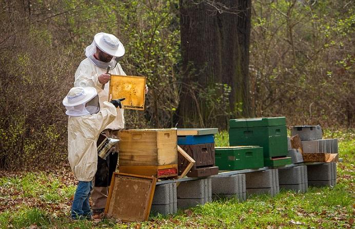 ce-trebuie-sa-stim-despre-afaceri-cu-albine