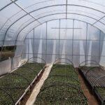 Cele mai profitabile culturi de legume in sere si solarii