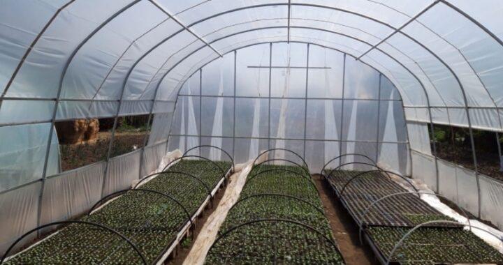 Cele-mai-profitabile-culturi-de-legume-in-sere-si-solarii